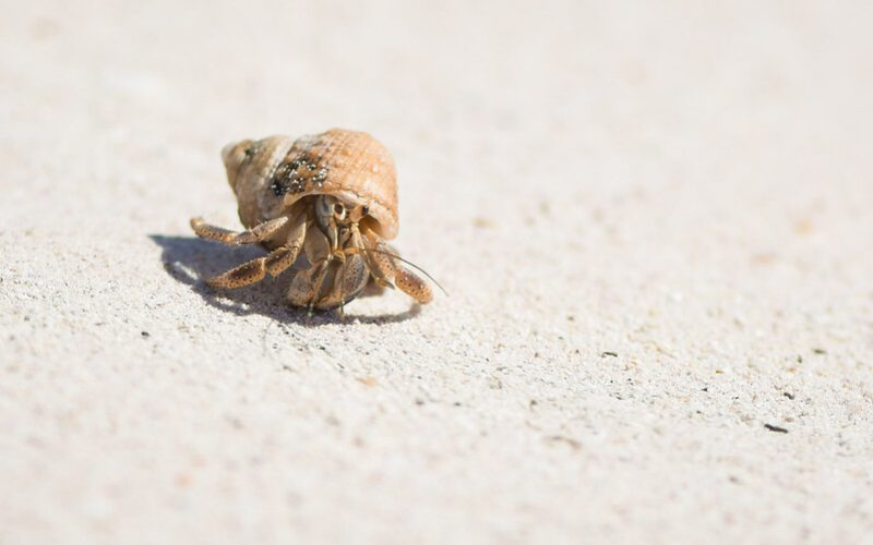 On the blog: Dan Brotzel on hermit crabs and storytelling