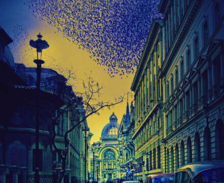 Fiona Erskine on The Starlings of Bucharest